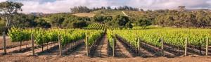 vineyardground