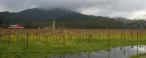 vineyardrain