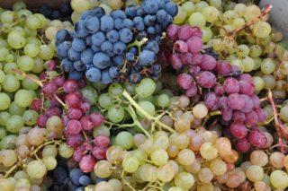Conoce las partes de la uva para un buen vino